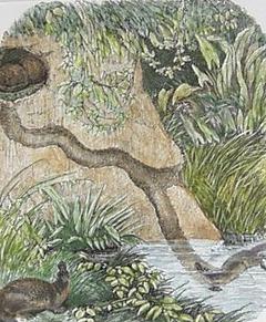 Схема норы утконоса с двумя входами фото