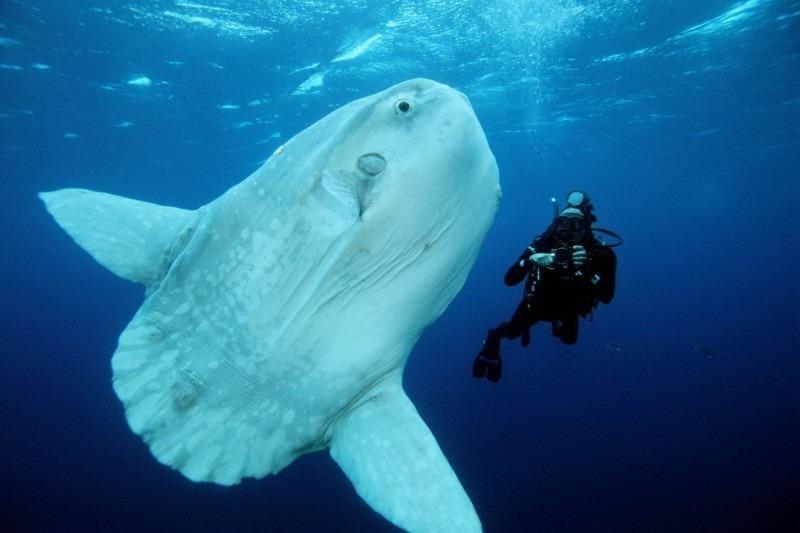 рыба-луна фото с человеком