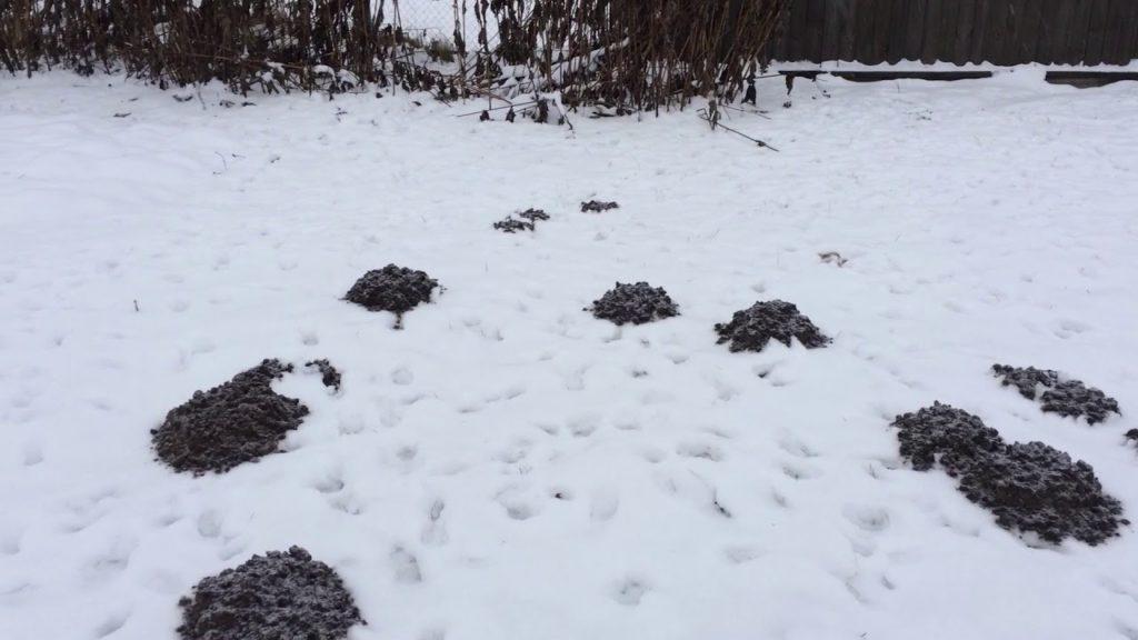 кроты зимой фото