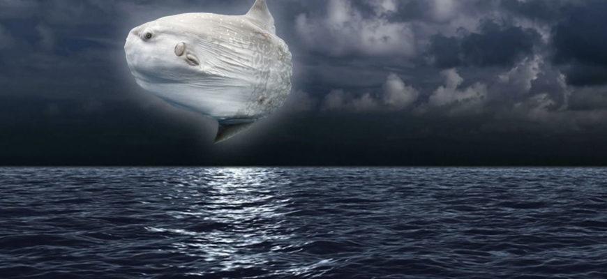 рыба-луна фото