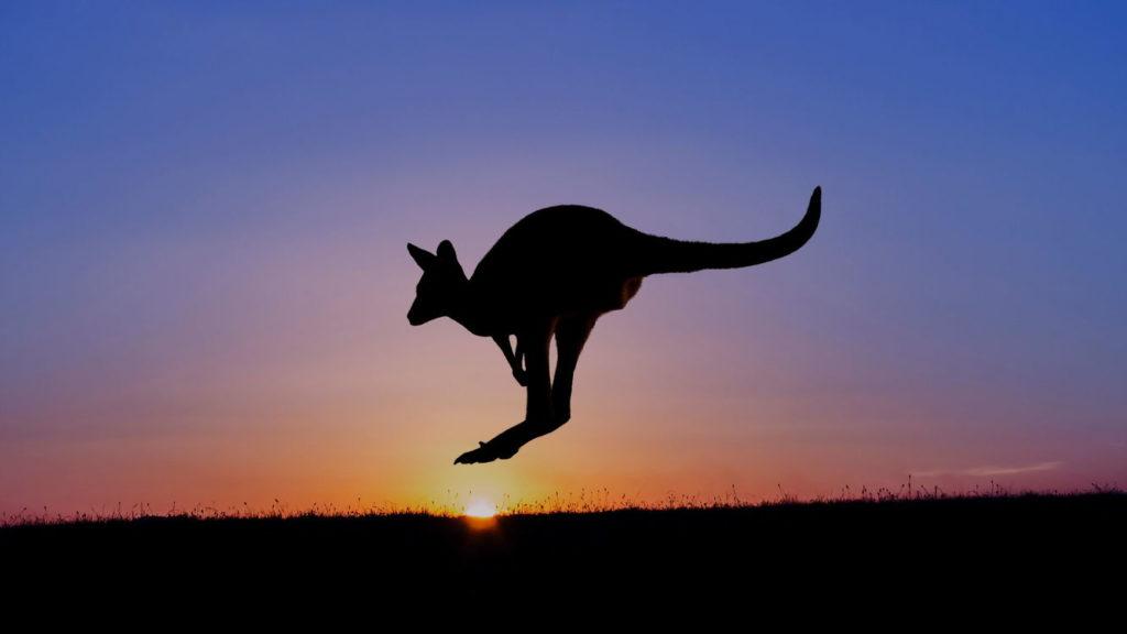 кенгуру на закате фото