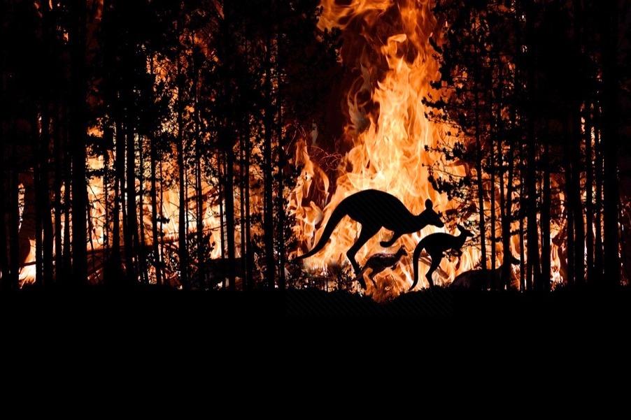 Австралийские пожары фото