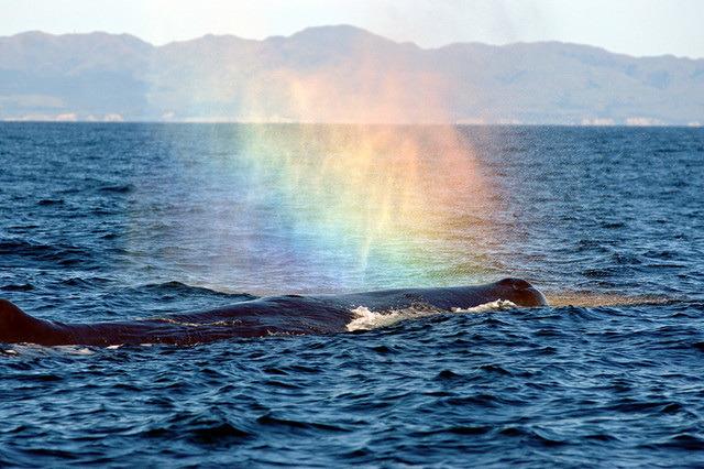 Радуга в фонтане кита фото