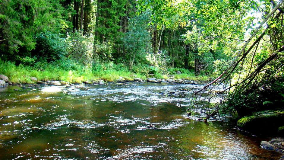 Фото форелевая река