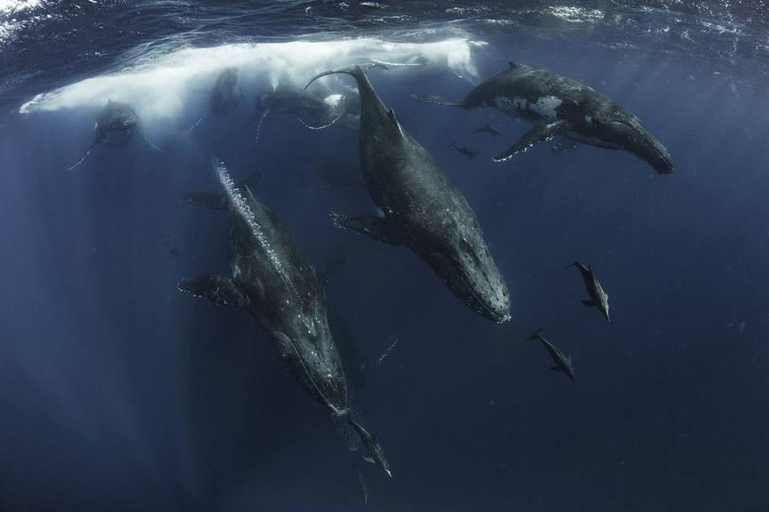 Стадо китов фото