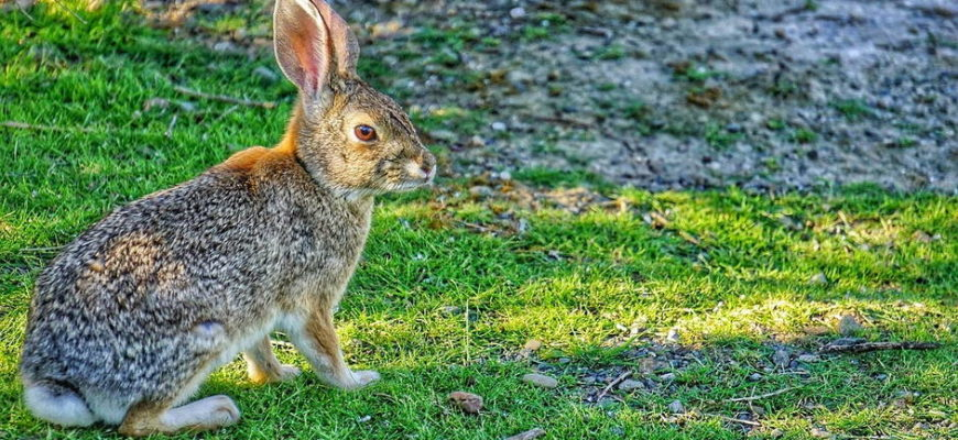 Фото зайца