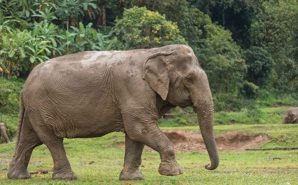 как выглядит слон