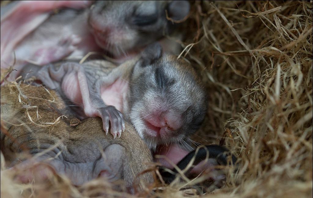 новорождённые летяги