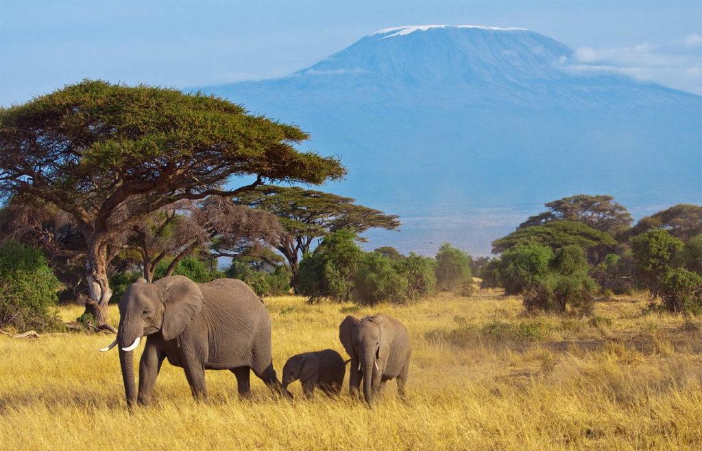 Африка фото слоны