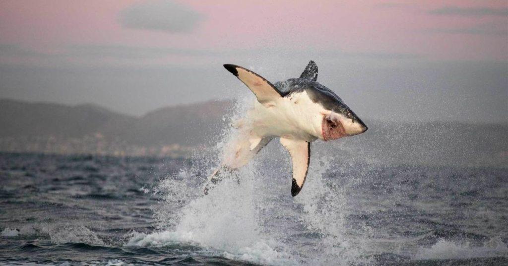 прыжок акулы