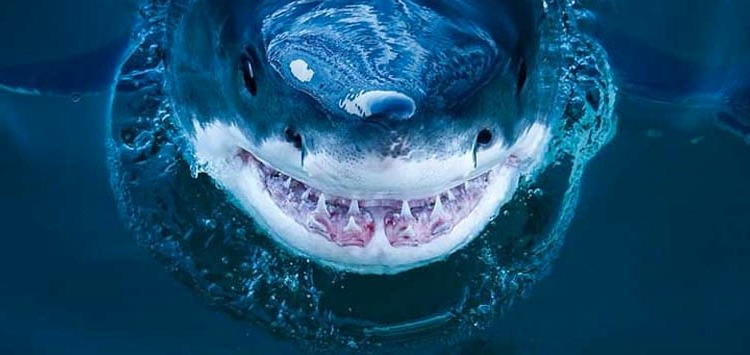 пасть акулы