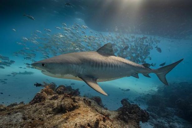 среда обитания акулы