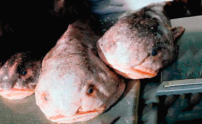 рыбы капли на фото