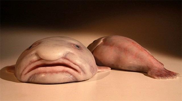 внешний вид рыбы капли