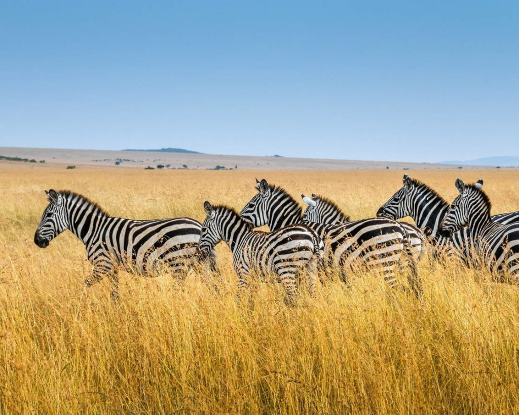 где живут зебры