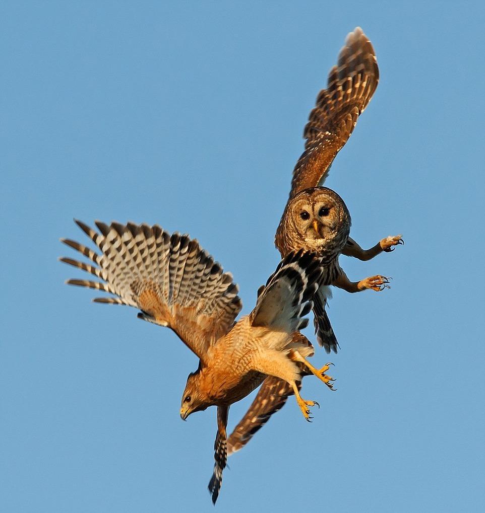 враги сов