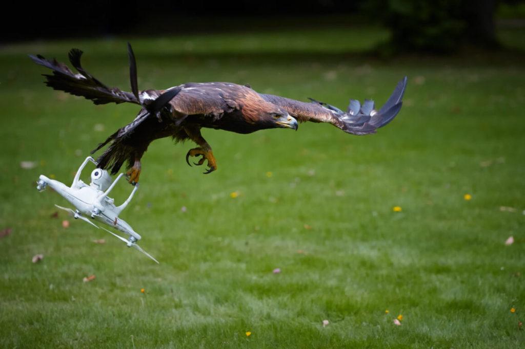Орёл поймал квадрокоптер