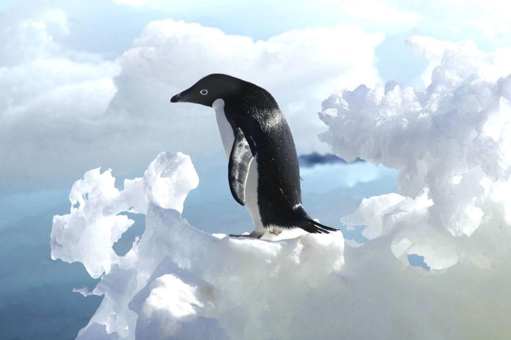 Пингвин Адели - Pygoscelis adeliae